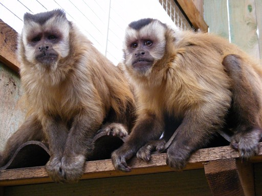 FUTERA - Die grosse Welt der Tiere - Primaten